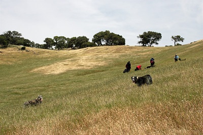 At one point, we thought we'd taken the wrong trail, backtracked, and then cut cross a meadow to meet the other trail. The dogs weren't sure that we knew what we were doing. Turns out, we didn't.