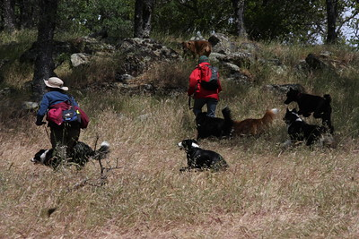 Some of the crew veered off trail a few times to find geocaches. The dogs were glad to help.