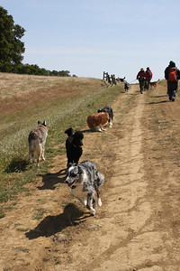 Starting off, the dogs were full of energy, running up and down and back and forth and wrestling.