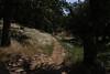 A glimpse down a side trail.