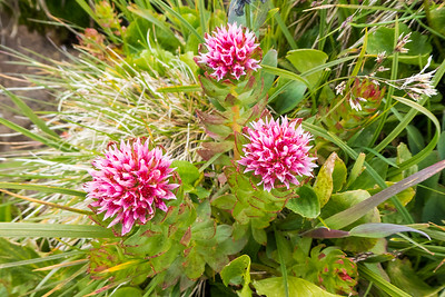 Wow, wildflowers!  Some kind of succulant