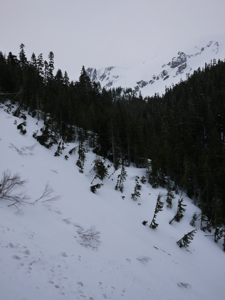 We had a route finding issue here. The trail crossed the third avalanche slope and went 30 meters up (left) before heading into the trees again. I noticed some blazing on a couple of small trees that led to the path.