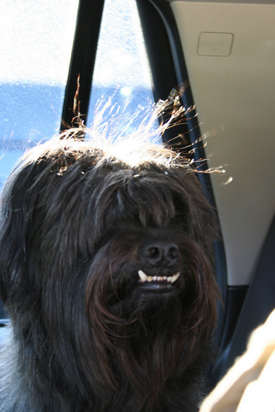 Wookie with the wind flowing through his hair on the way to Bishop.