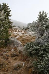Scott hiking in the pretty meadowy frosty trees.
