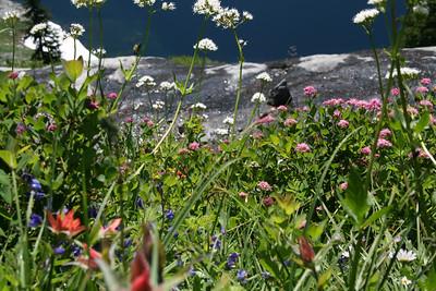 Flowers above Alaska Lake.