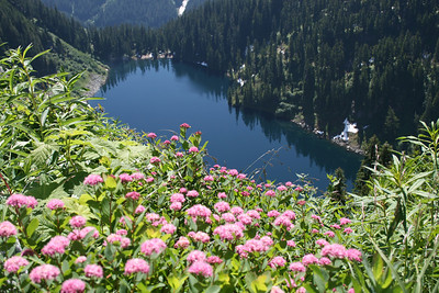PINK flowers and Alaska Lake.