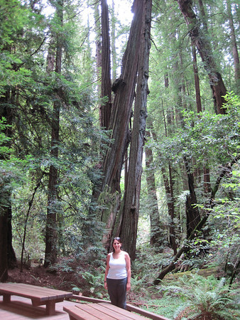 Muir Woods with Michele - July 2010