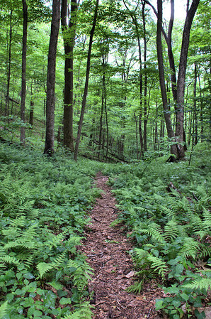 Chestnut Branch, Conasauga, and Tear Branch Trails 5/17/14
