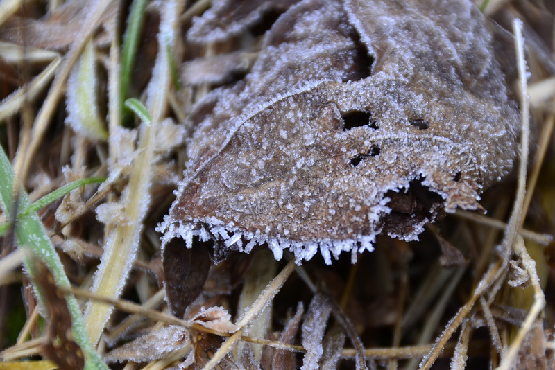 Pretty ice crystals on the leaves.