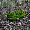 Did I mention I love all the moss covered rocks here... :-)