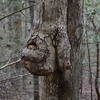 You mess with this tree and you might get a fist full of bark. :-)