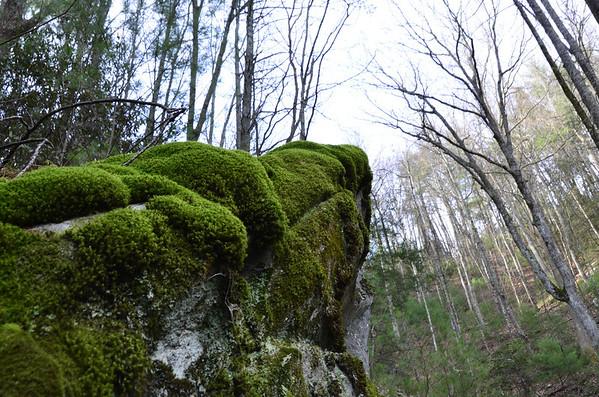 Lichen, Liverwort and Moss