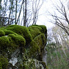 I love all the moss covered rocks here.