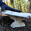 Unknown - This mushroom was huge, easily 10-12 inches in diameter, as you can see from Scott's hand.