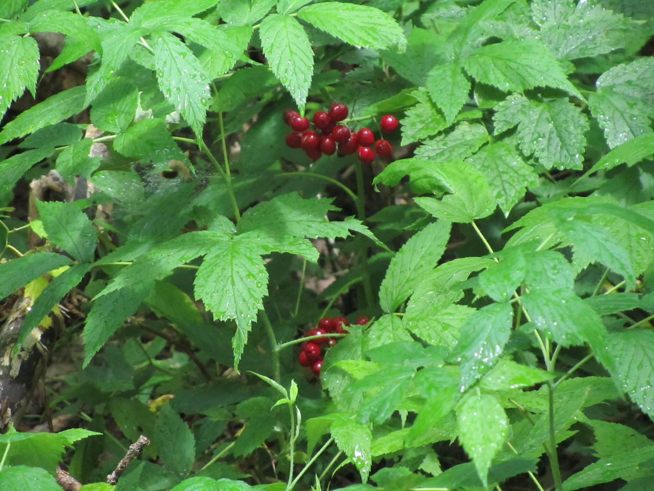 Some nice bright berries. Not sure if they are edible but they look tasty.