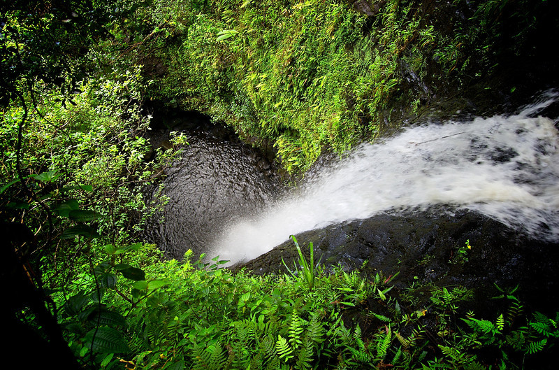 Toxic Reverie  Looking out over Ka'au Waterfall No. 1