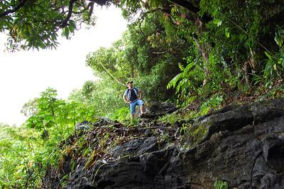 Manoa Cliff Trail - Captain Morgan
