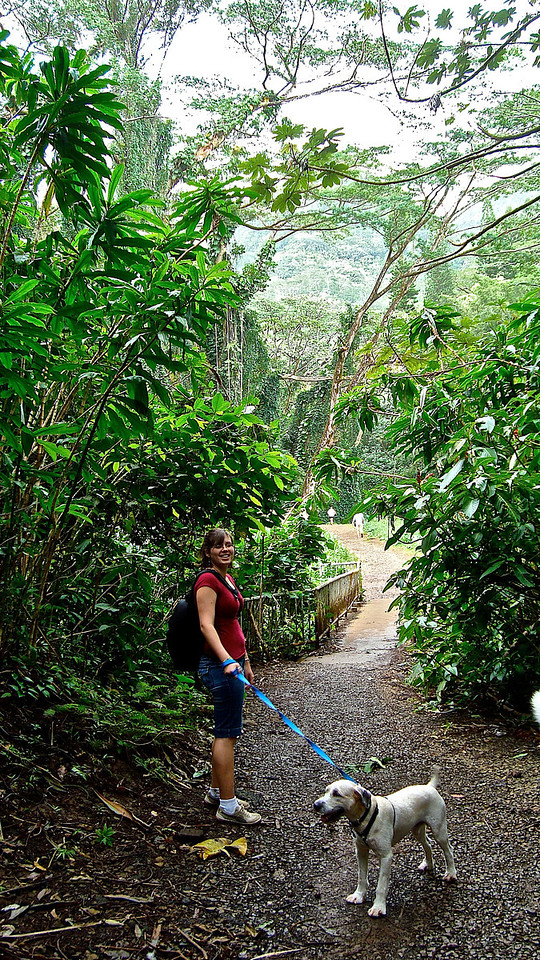 Manoa Waterfall Trail  Taken using a Sony Cyber Shot. I believe this was my second hike on the island. An old photo, and one of the first I'd taken here.