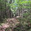 Ridgepole Trail