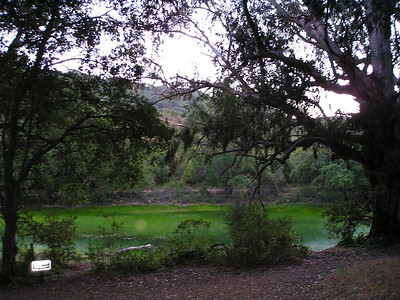 Picchetti pond at dusk, filled with reeds. This is a wet-season pond, protected for the wildlife that it supports.