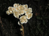 Don't know what these little dried flowers were, but they were everywhere, and attractive in a stark, elegant way.