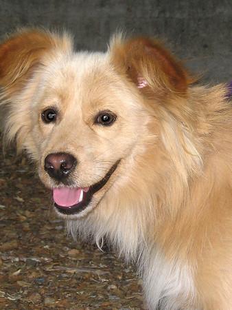 Pulgas Ridge Hike With Dogs