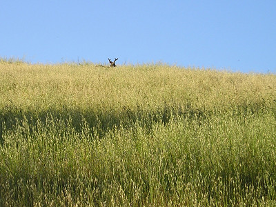 As a group, we saw this deer hanging around on the hillside above us.