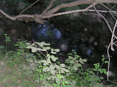 Creek with the camera's flash.