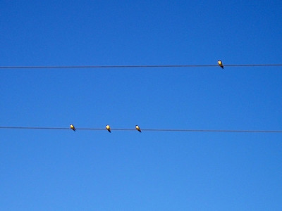 I liked how these birds had distributed themselves across the wires, like musical notes on a staff! (Crappy little camera didn't allow a really good shot here.)