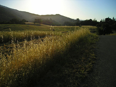 Headed back to the car alone, taking photos. Backlit oat grass and hills.
