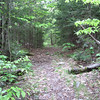 Algonquin Trail starts out as a logging road
