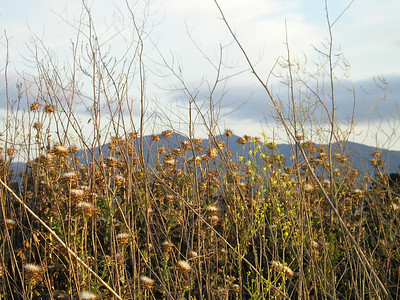 Some of the drying vegetation caught my eye against the mountains to the south.
