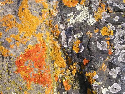 The lichen's brilliant colors make it look like Mother Nature's own graffiti.