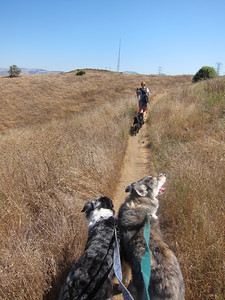 Barbara leads the way--as usual, this is my view of my dogs for most of the trip.