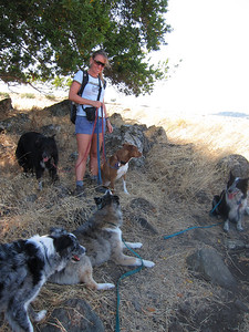 Boost, Tika, Sheila, Barbara, Jersey, and Bandit. (Tika thinks Barbara has food, hence devoted voluntary lie-down-type obedience.)