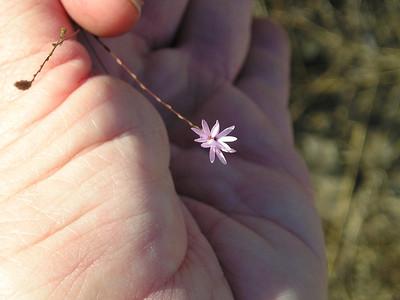 One leeeetle tiny purple flower.