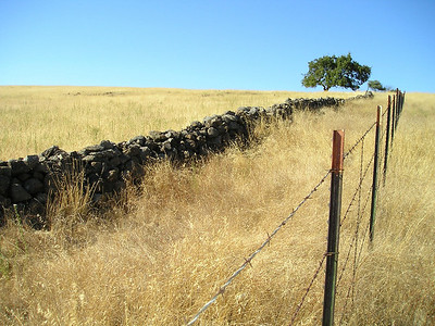 Just liked the lines of the fences going up to oak tree and the hilltop.