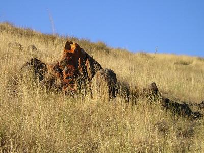 This park's rocks have accrued some stunningly bright lichen.
