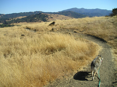 This is the summit of the hill on this side.  Boost drank a pint or two of water; Tika wasn't even vaguely interested in a drink.