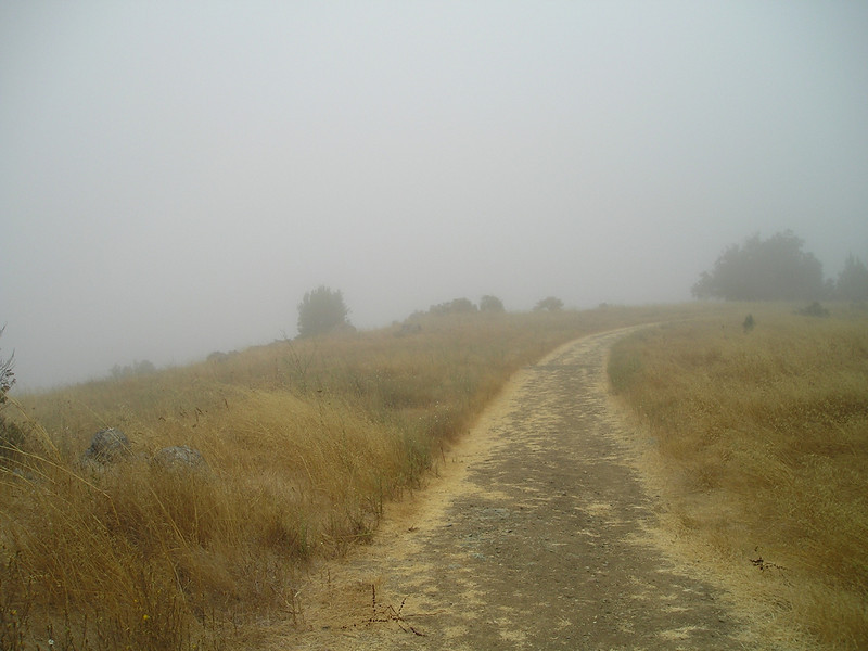 Foggy foggy foggy! Not much of a view of the valley today.