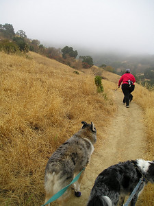 Tika and Boost are eager to catch up. You can see Vici leaning into the steep uphill, which doesn't show up well in the photos.