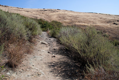 The hillsides have dried up pretty quickly despite the late rains.