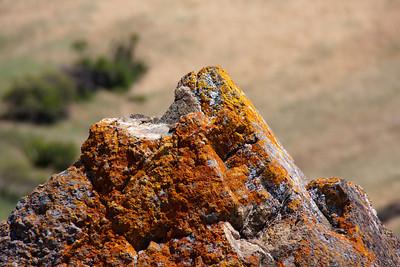 Lichen-covered rock.