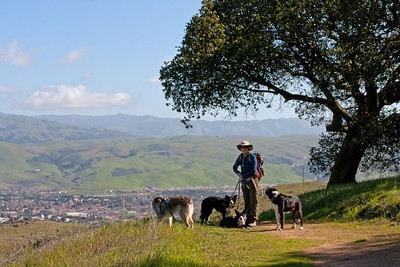 Friend and her dogs (and Tika) hanging in the shade (Joice Trail, I think) with San Jose in the background.