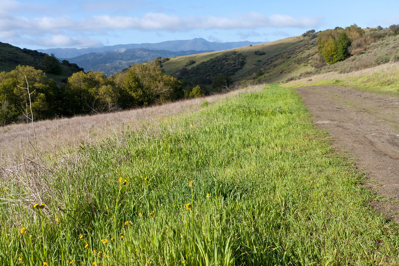 Mount Umunhum from the Mine Trail between Fortini Trail and Pueblo area. A few fiddleneck flowers.