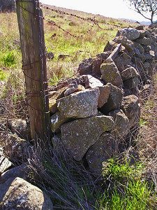 Another remnant of previous inhabitants: An old stone wall and rusty barbed wire.