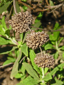 Interesting seed heads.