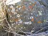 More colorful lichen.