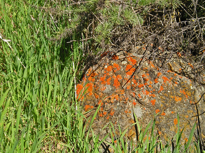 I love the lichen on the rocks in the park. The bright colors contrast so beautifully with the vegetation surrounding them.
