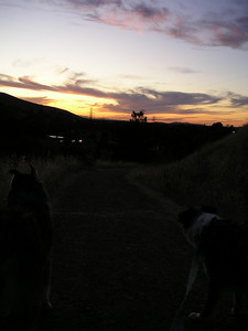 The dogs aren't really admiring the sunset, but they should be.